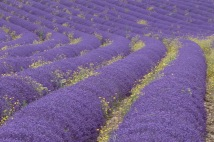 provence-11