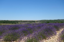 provence-3